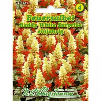 Salvie decorativă Reddy White Surprise Chrestensen imagine 7
