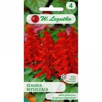 Salvie decorativă roșie Legutko imagine 1