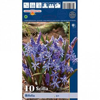 Scilia Bifolia imagine 4