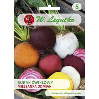Sfeclă, amestec de soiuri Legutko imagine 6