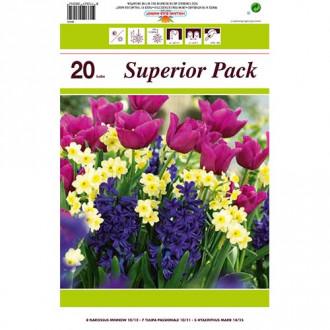 Super ofertă! Lalele, Narcise și Zambile, set de 20 de bulbi imagine 2