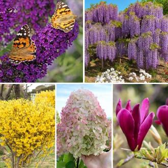 Super ofertă! Plante ornamentale Grădina înfloritoare, set de 5 soiuri imagine 2