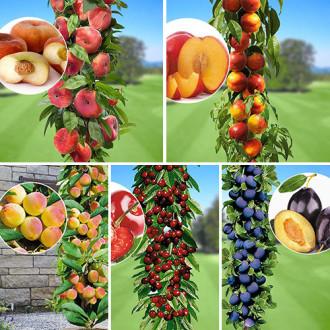 Super ofertă! Pomi columnari Magia gustului, set de 5 soiuri imagine 3