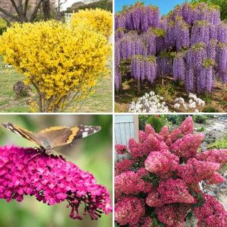 Super ofertă! Plante ornamentale Grădina colorată, set de 4 soiuri imagine 3