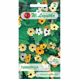 Thunbergia, mix multicolor Legutko imagine 1