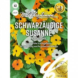 Thunbergia Susanne Blackeye, mix multicolor Chrestensen imagine 4