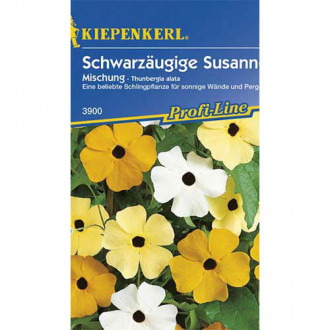 Thunbergia Susanne, mix multicolor Kiepenkerl imagine 3