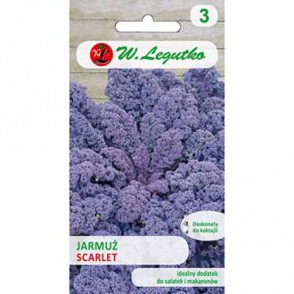 Varză Kale Scarlet Legutko imagine 4