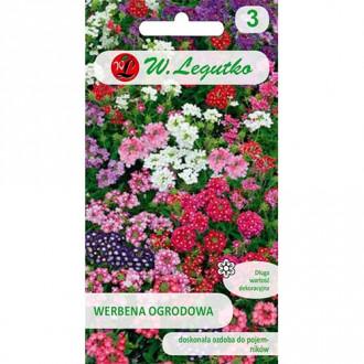 Verbena de grădină, mix multicolor Legutko imagine 2