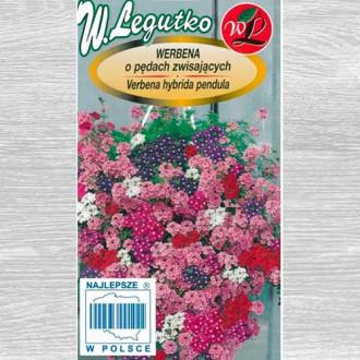 Verbena curgătoare, mix multicolor Legutko imagine 1