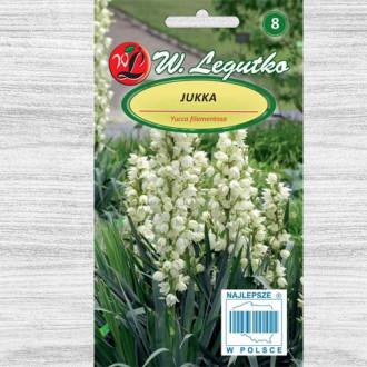 Yucca albă Legutko imagine 1