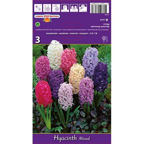 Zambile Spring Palette mix multicolor imagine 1 articol 67598