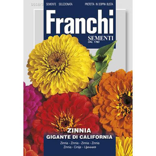 Zinnia (Cârciumăreasă) gigantă de California imagine 1 articol 87305