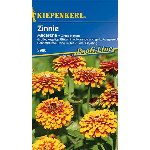 Zinnia (Cârciumăreasă) Macarena Kiepenkerl imagine 1 articol 86360