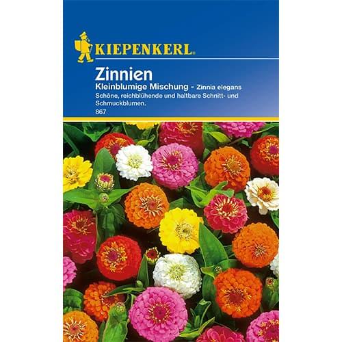 Zinnia (Cârciumăreasă) pitică, mix multicolor Kiepenkerl imagine 1 articol 86356