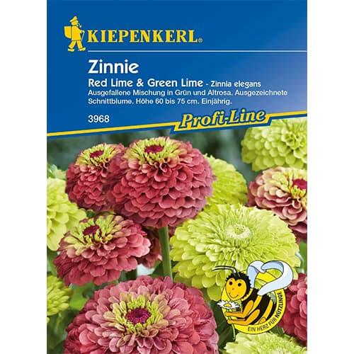 Zinnia (Cârciumăreasă Red & Green Lime Kiepenkerl imagine 1 articol 77439