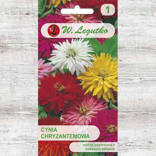 Zinnia (Cârciumăreasă) tip crizantemă, mix multicolor Legutko imagine 1 articol 86821