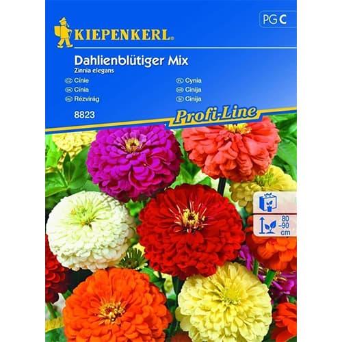 Zinnia (Cârciumăreasă) tip dalie, mix multicolor Kiepenkerl imagine 1 articol 86353