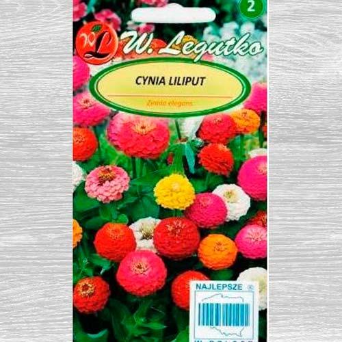 Zinnia Liliput, mix multicolor Legutko imagine 1 articol 69578