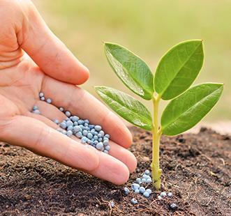 Îngrășăminte și protejarea plantelor