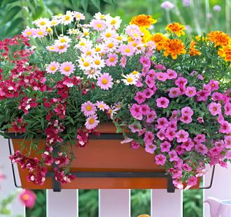 Semințe de flori curgătoare