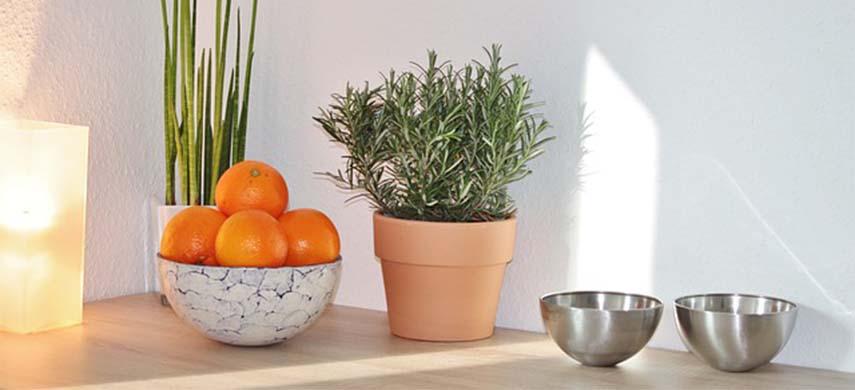 plantează rozmarinul la ghiveci