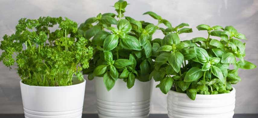 reguli pentru plantarea legumelor în balcon