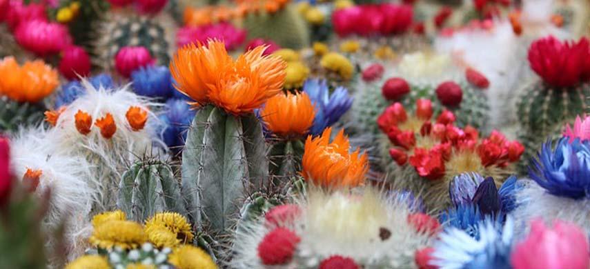 îngrijire cactus la interior
