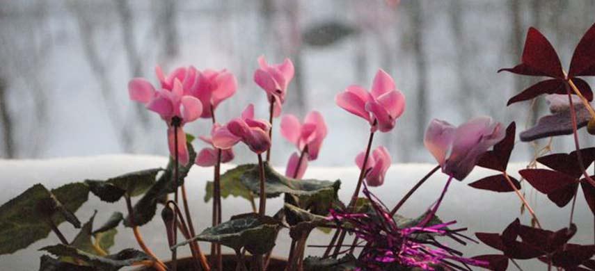 intretinere plante de camera iarna
