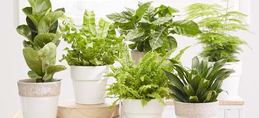 ingrijire plante de camera iarna