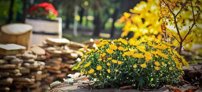 gradina de flori in noiembrie