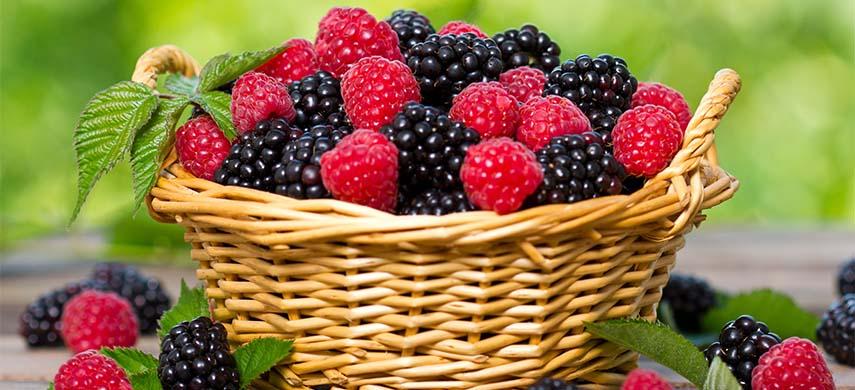soiuri de fructe de padure rentabile