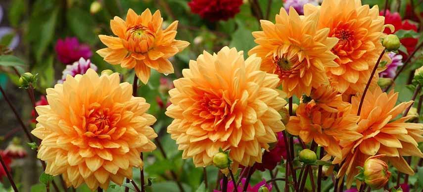 ingrijire flori de toamna