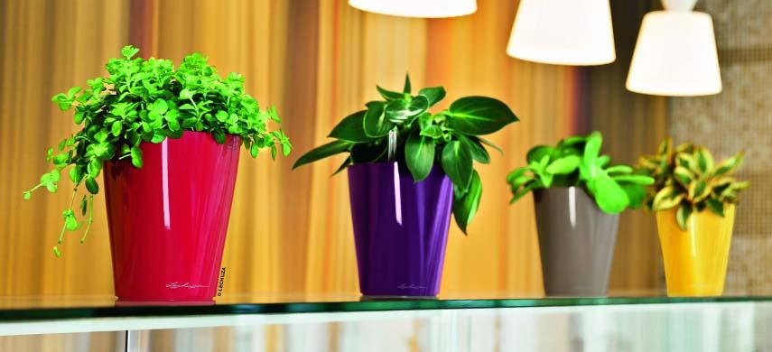ghid ingrijire plante interior