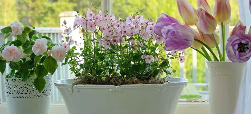 sfaturi ingrijire plante interior