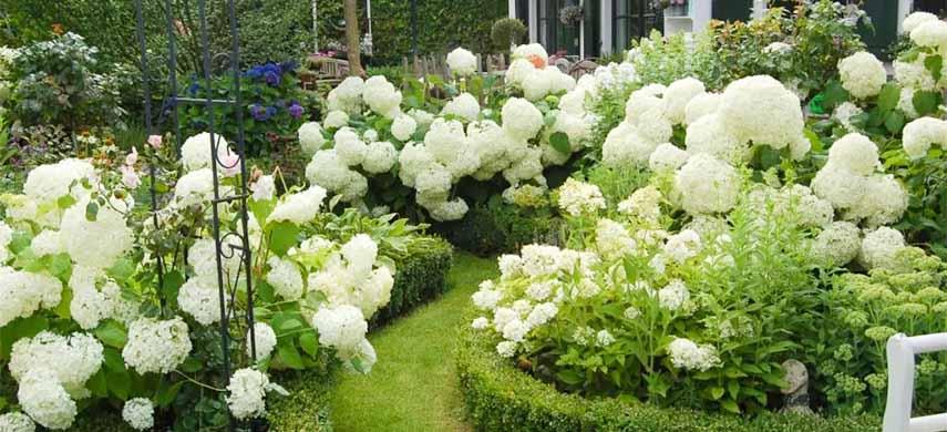 flori perene de vara