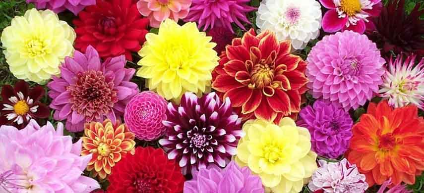 păstrarea bulbilor de flori peste iarna