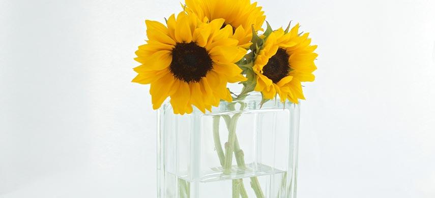 ingrijire floarea-soarelui