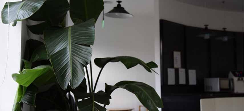 semne ca planta e in repaus vegetativ