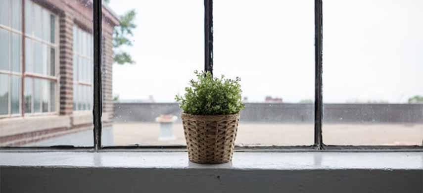 plante de interior in repaus vegetativ