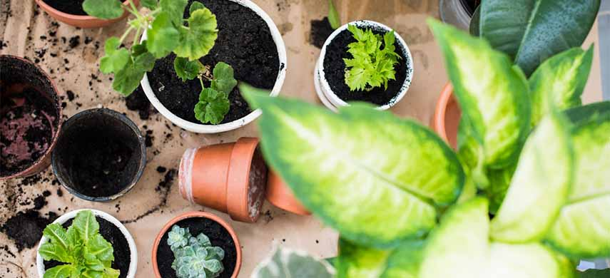 îngrijire plante de interior