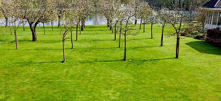 intretinere livada pomi columnari