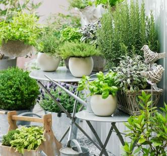Semințe pentru casă și grădină