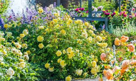 Aromă pentru întreaga grădină | GrădinaMax