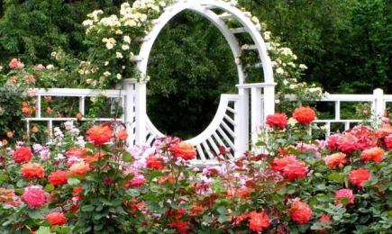 Capodopera din grădină | GrădinaMax