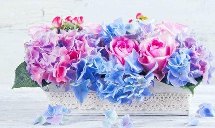 Hortensie Bouquet Rose | GrădinaMax
