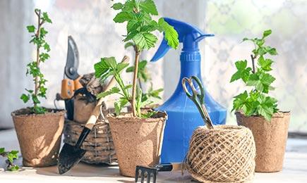 Îngrăşământ pentru răsaduri | GrădinaMax