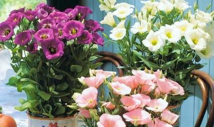 Pentru buchete de flori | GrădinaMax