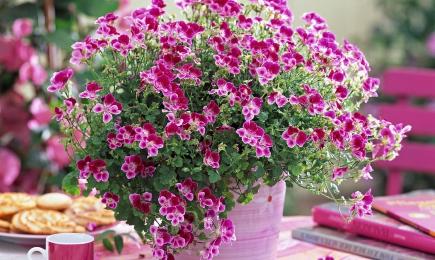 Pentru paturi de flori | GrădinaMax
