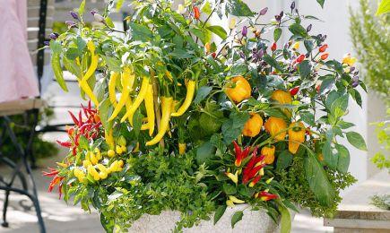 Set de semințe pentru tot anul | GrădinaMax